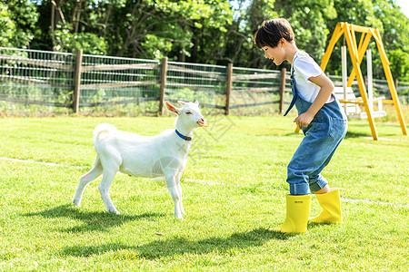 小男孩农场喂羊图片
