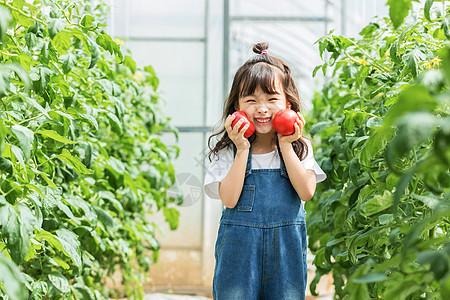 小女孩蔬菜棚摘水果图片