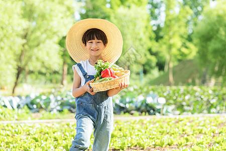 小男孩田地摘菜图片