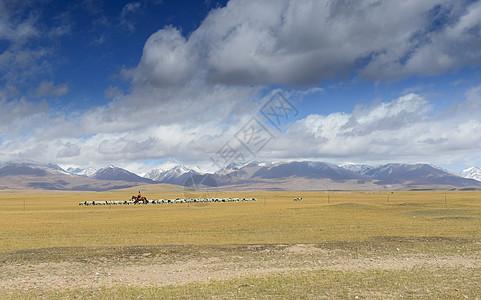 高原放牧人图片