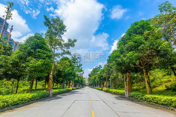 陵园道路图片