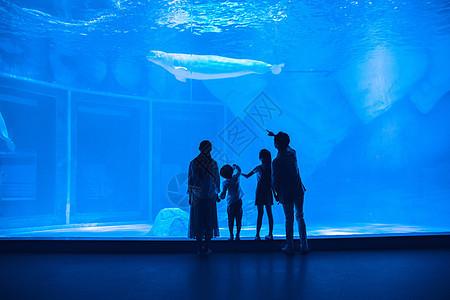 年轻家庭参观海洋馆背影图片
