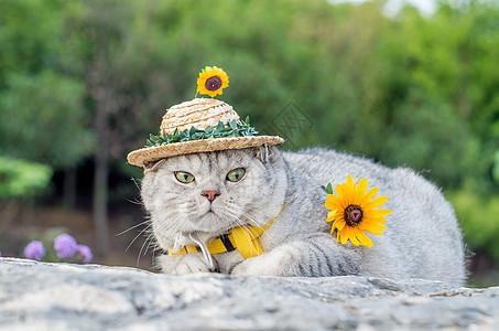 小草帽猫咪图片