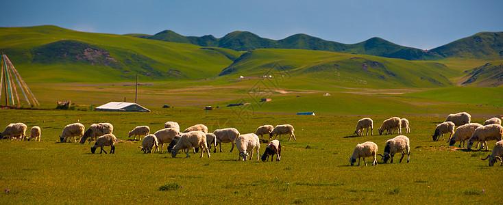 大草原上的丰收场景图片