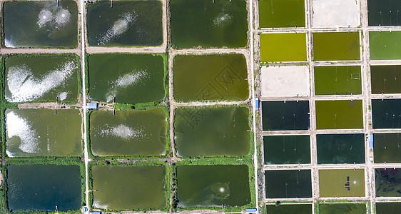 鱼塘里的鱼_鱼塘图片_鱼塘素材_鱼塘高清图片_摄图网图片下载