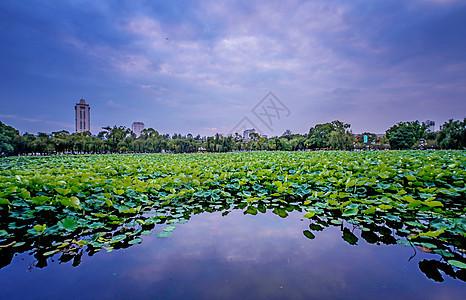 云南昆明翠湖公园荷花夕阳图片