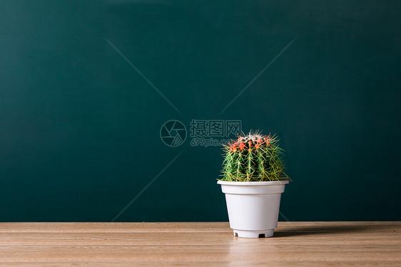 绿植简约背景图片