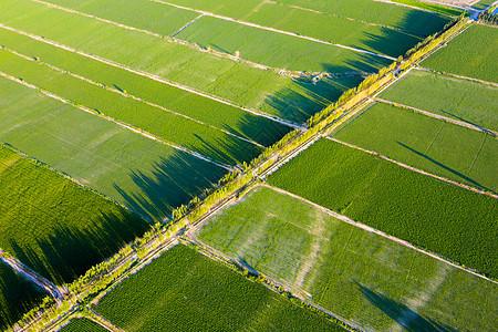 新疆农业大规模种植航拍图片