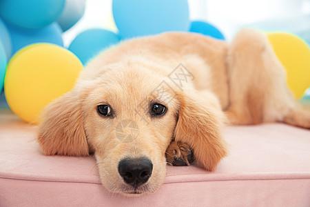 一只萌宠狗狗趴在飘窗台上面图片