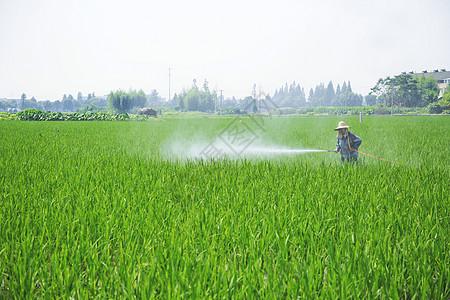 水稻田洒农药图片