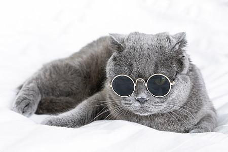 英短蓝猫图片