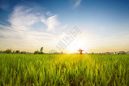 农田全景风光