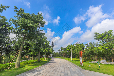 贵港园林荫道图片