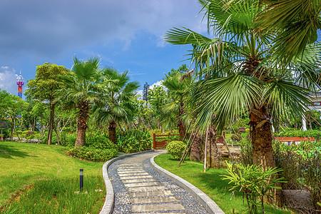 贵港棕榈园小道图片