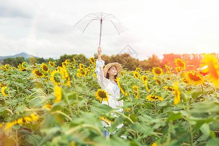 向日葵少女图片