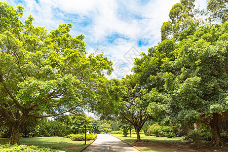 公园绿化林荫小道图片