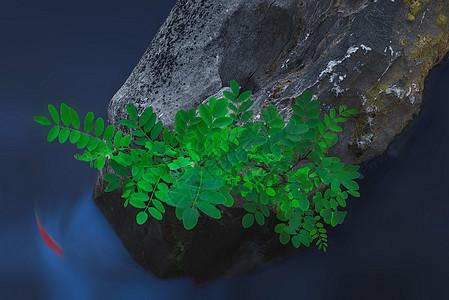 绿叶锦鲤图片