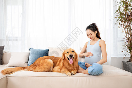 孕妇和宠物金毛犬相伴图片