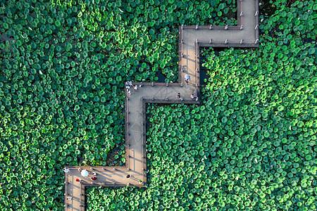 夏天俯拍武汉东湖荷塘和栈桥图片