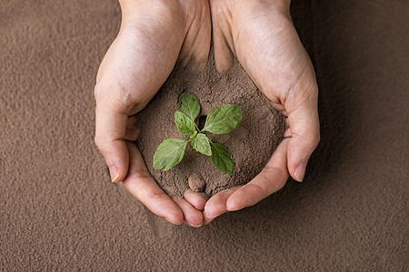 呵护泥土里的小嫩芽图片