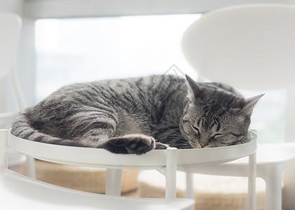 睡觉的猫咪图片