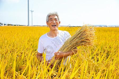 秋季农民稻田丰收图片