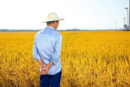 秋季稻田丰收农民背影图片