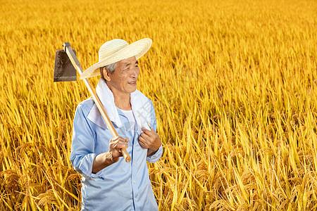 农民伯伯拿锄头在稻田里歇息图片