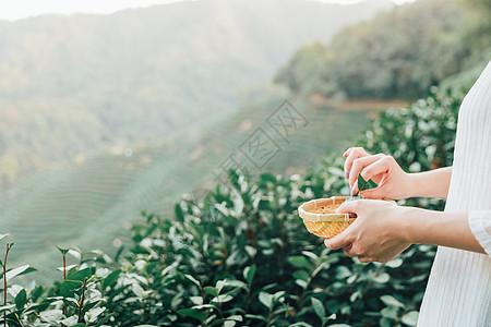 茶田里的采茶姑娘特写图片