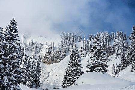 冬日景观中被雪覆盖的树木图片