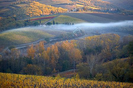 秋天的基安蒂古典葡萄园图片