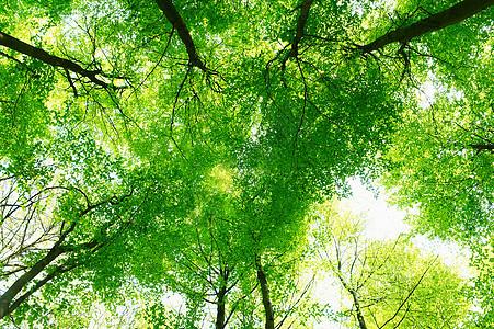 阳光下的树荫图片