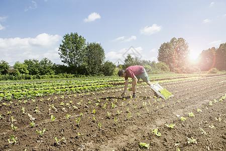 农民在农场育苗图片