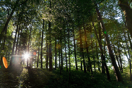 阳光透过森林中的树图片
