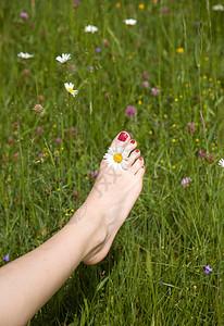 花丛中女人的脚图片