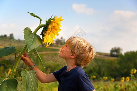男孩在户外闻向日葵图片
