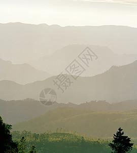 俯瞰斯里兰卡中部高地努瓦拉伊利亚的茶园图片