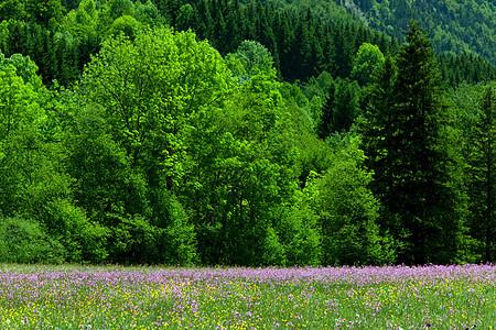 法国朱拉地区乡村景色图片