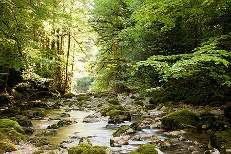 法国朱拉地区森林河流景观图片
