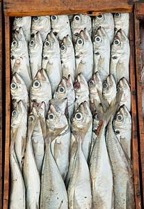 摩洛哥埃萨瓦伊拉码头市场上排队出售的鱼图片