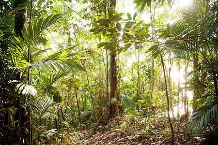 马来西亚婆罗洲沙捞越古晋巴塘国家公园森林图片