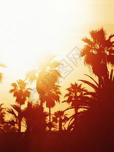 美国加利福尼亚州大苏尔海滩棕榈树上的日落图片
