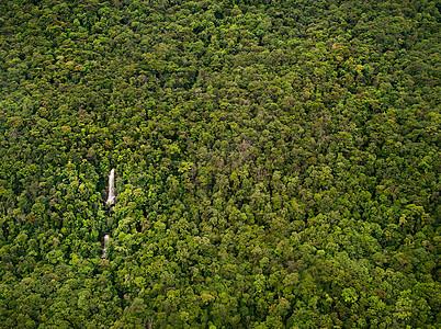 委内瑞拉卡纳玛国家公园茂密丛林图片