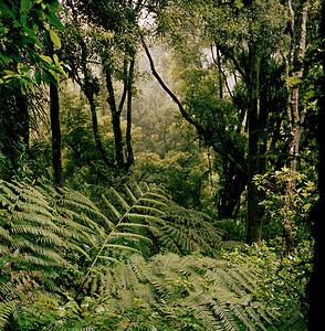 新西兰南岛雨林图片