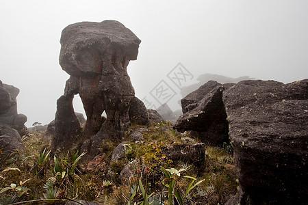 在委内瑞拉一座巨大的平顶山罗雷马山顶上,云雾中形成了奇异的岩层图片