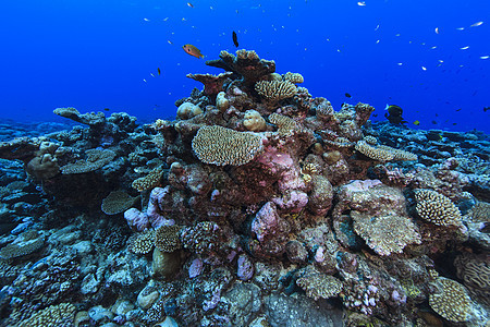 库克群岛帕默斯顿环礁珊瑚礁水下视图图片