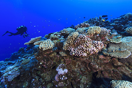 库克群岛帕默斯顿环礁潜水者拍摄珊瑚礁的水下视图图片