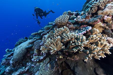 水下摄影师在库克群岛帕默斯顿环礁拍摄珊瑚礁图片