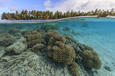 库克群岛帕默斯顿环礁珊瑚礁的水下和水面视图图片