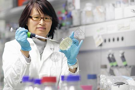 科学家在实验室检查培养皿图片